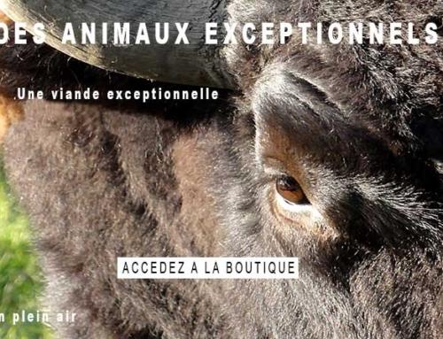 Les Bisons d'Auvergne